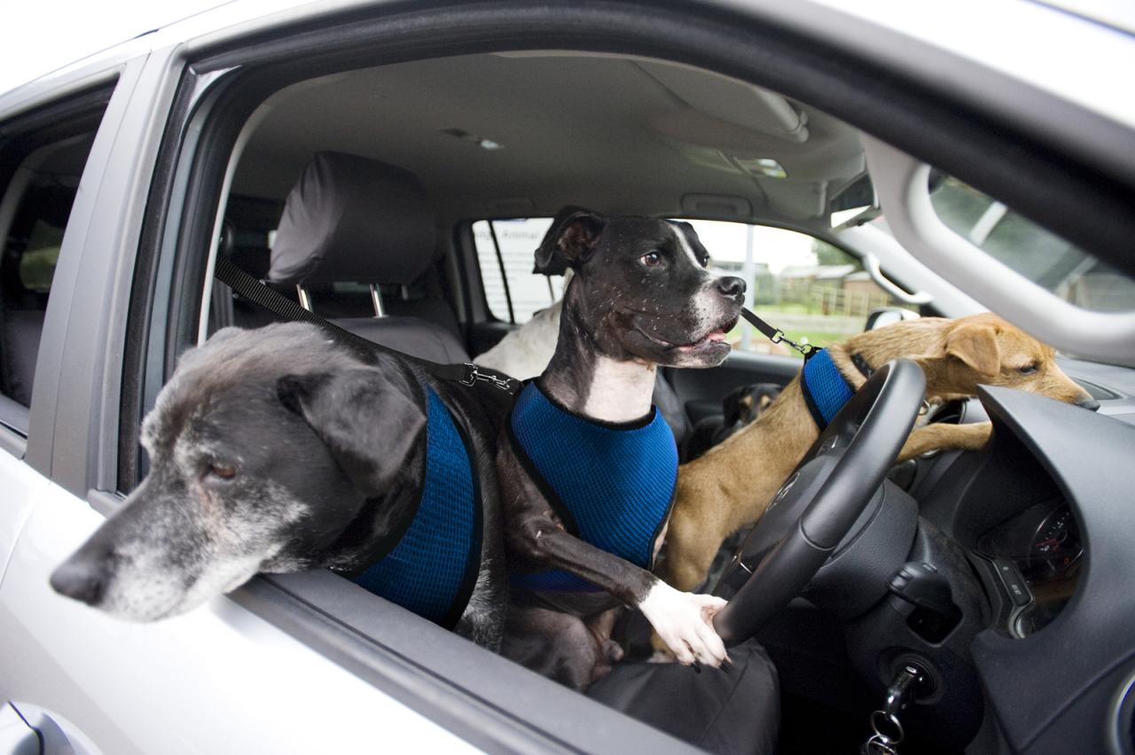 Volkswagen Announces Paw Wheel Drive Teaching Dogs To