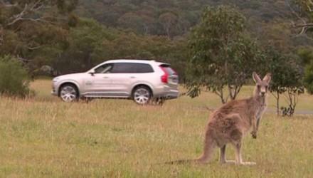 Volvo developing kangaroo detection technology for Australia